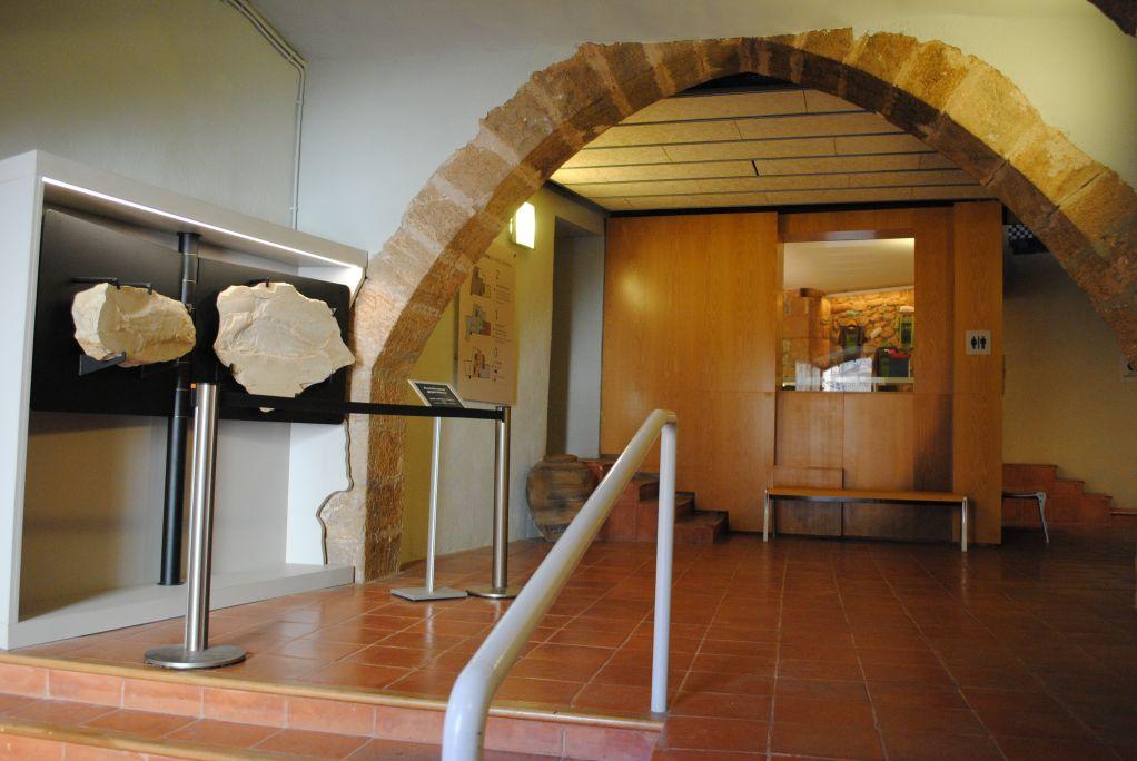 Vestíbul del museu, on s'exposa un exemplar fòssil de grans dimensions (Colobodus giganteus); al fons, la botiga.