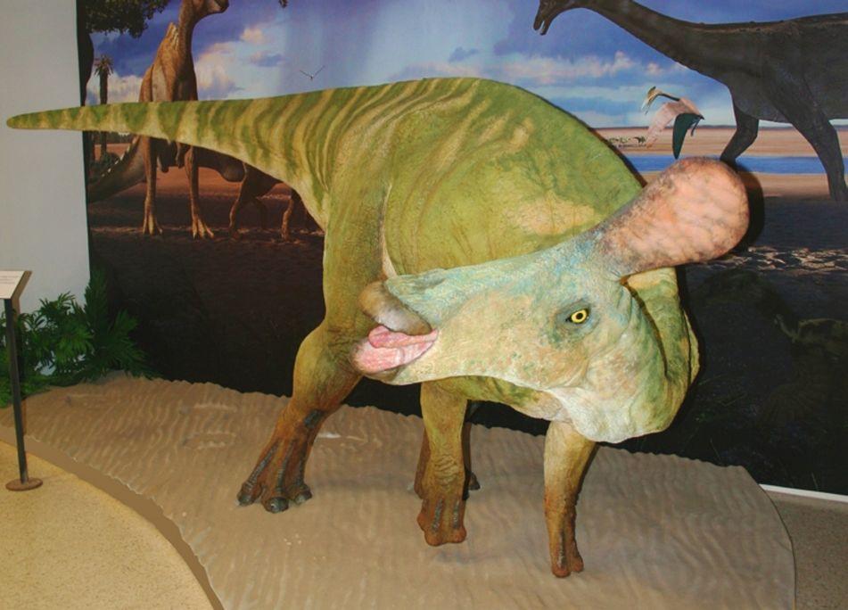 Reproducció a mida real del Pararhabdodon isonensis.