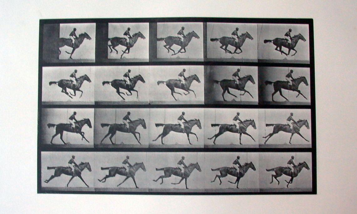 Cronofotografia 'Daisy galloping saddled' Plate 624 d'Eadweard Muybridge. Calotip (vintage), 1887.