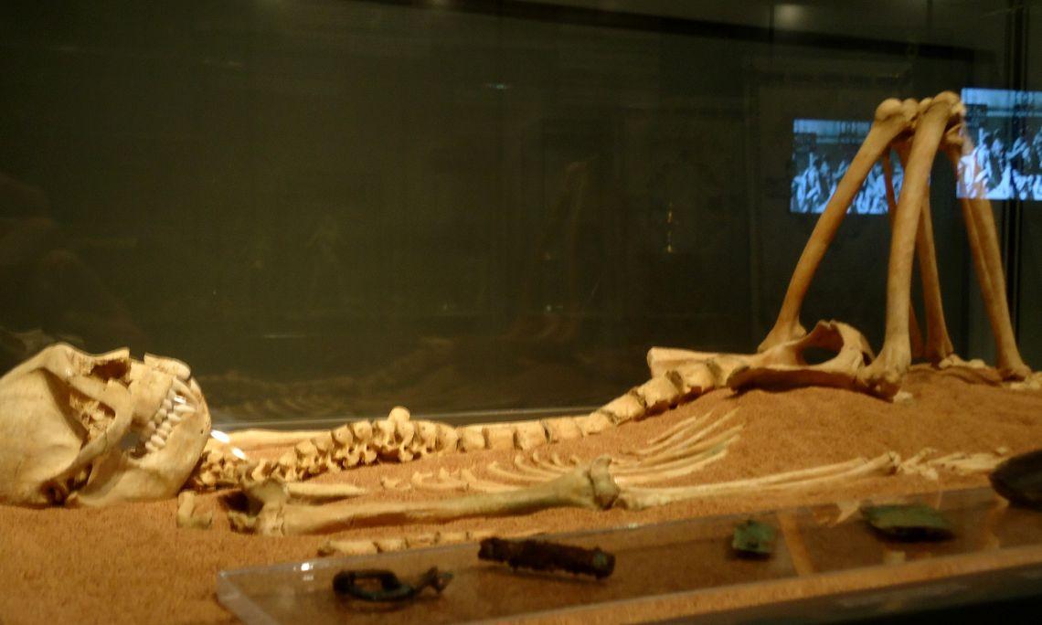 Esquelet de macaco amb el seu aixovar, dels segles V - VI, procedent del jaciment de les Colomines.