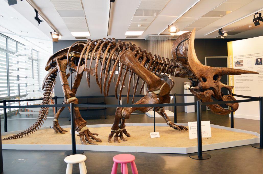 Esquelet sencer de Triceratops