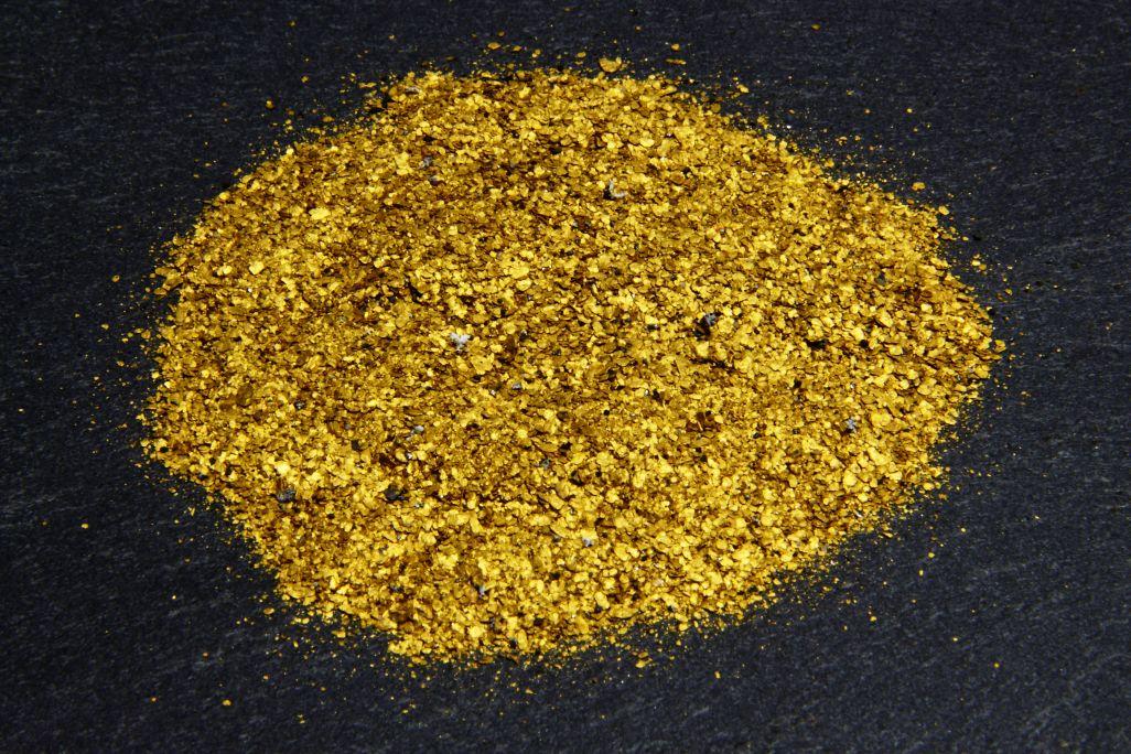 Pepitas de oro extraídas del río Segre a la altura del término de Balaguer.