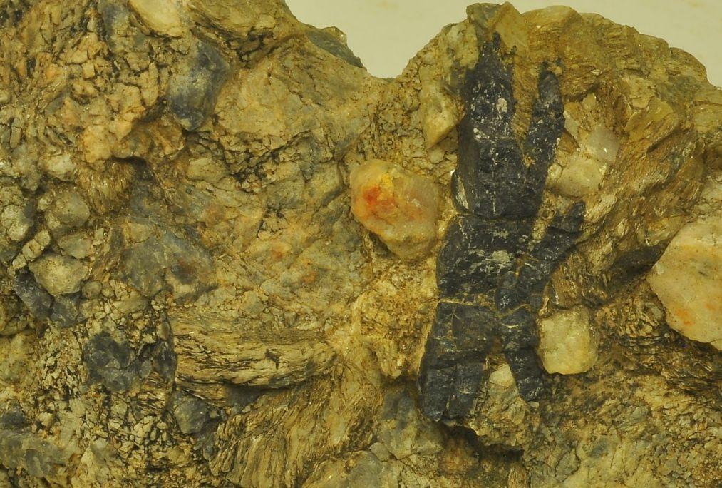 Columbite,Parc naturel du Cap de Creus. Musée d'Arenys de Mar, nº de registre 5837. Photographie d'Irene Masriera.