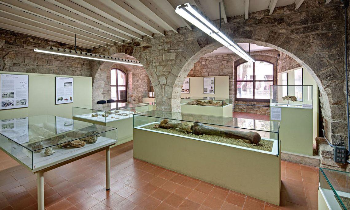 Sala de paleontología (Arqueoxarxa, Josep Casanova)