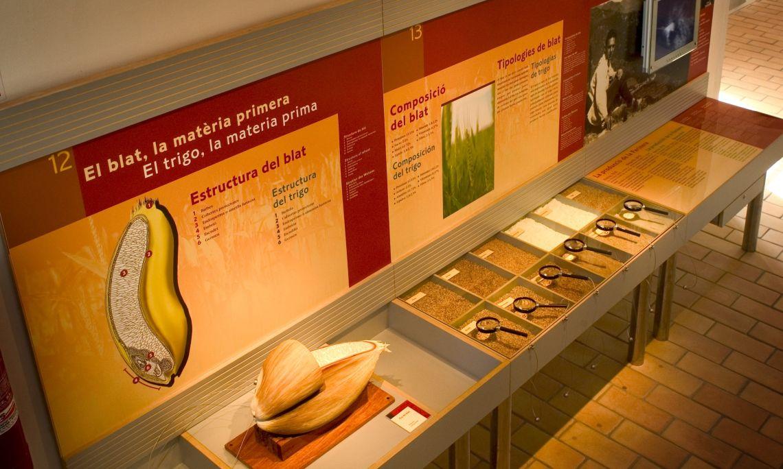 Coneix les característiques del blat i el que cal saber per fer un bon pa. ©Pep Botey.