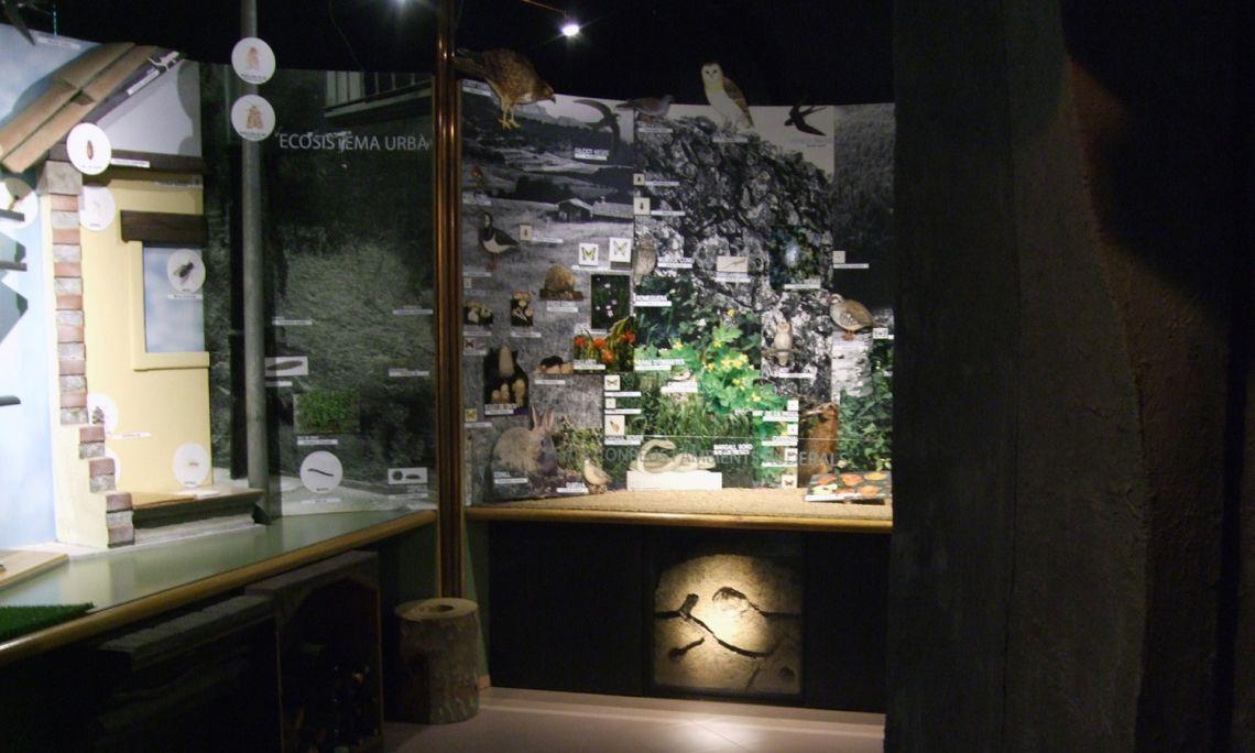 Vista de la sala d'ecosistemes.
