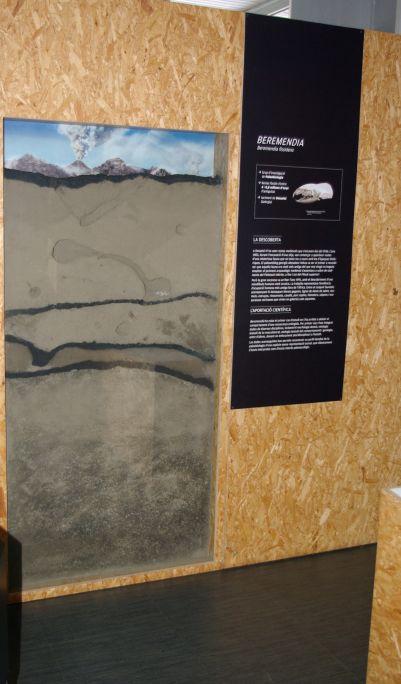 Reconstrucció del cau de Beremendia fissidens