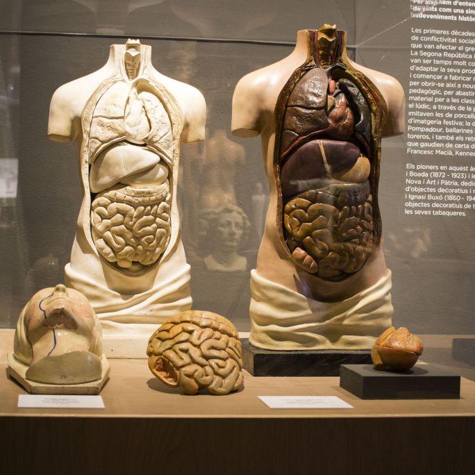 Tronco humano didáctico. Fotografía: Blai Farran.