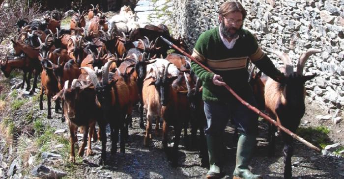 <p>El Jes&uacute;s i la Rosa elaboren el formatge amb la llet del seu propi ramat de cabres.</p>