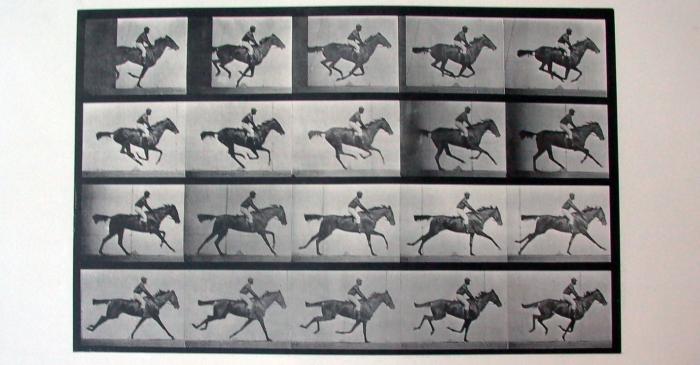 "<p>Cronofotografia ""Daisy galloping saddled"" Plate 624 d'Eadweard Muybridge. Calotip (vintage), 1887.</p>"