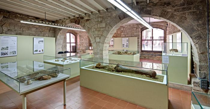 <p>Sala de paleontologia (Arqueoxarxa, Josep Casanova)</p>