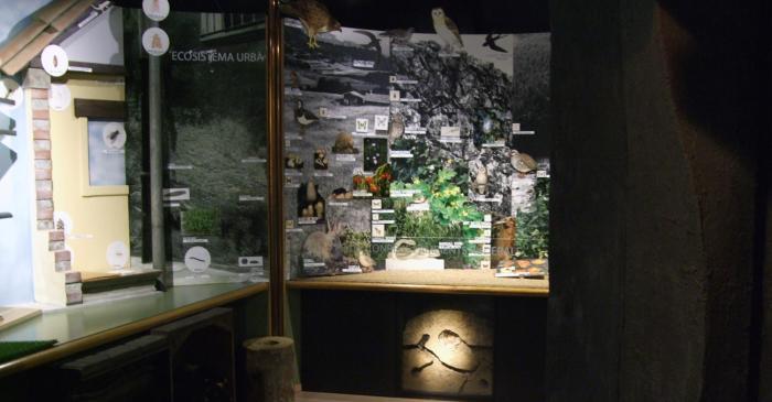 <p>Vista de la sala de ecosistemas.</p>