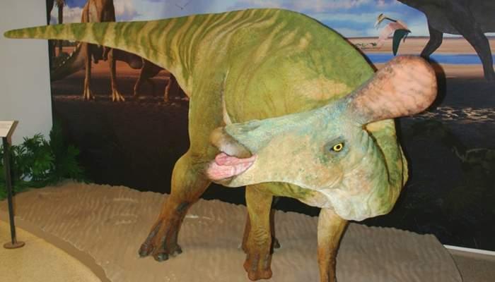 <p>Reproducci&oacute; a mida real del <em>Pararhabdodon isonensis</em>.</p>