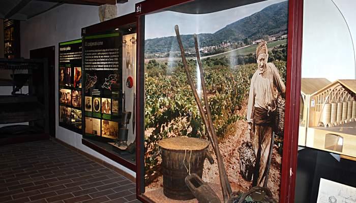 <p>El cultivo de la vid en la Conca de Barber&agrave;.</p>