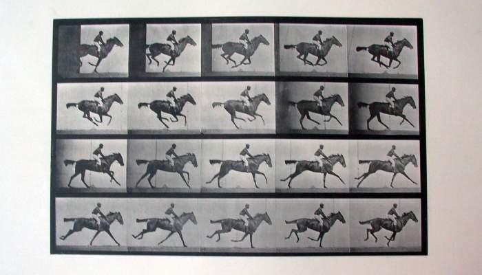 "<p>Cronofotograf&iacute;a ""Daisy galloping saddled"" Plate 624 de Eadweard Muybridge. Calotipo (vintage), 1887.</p>"