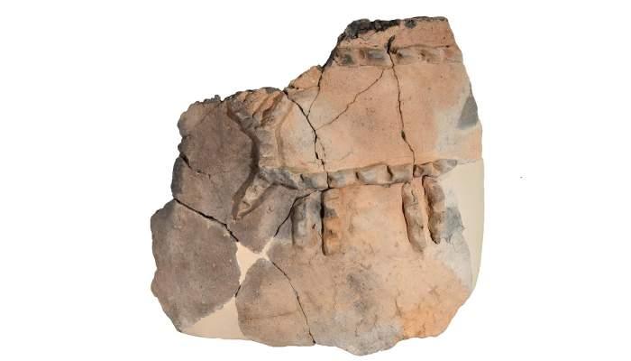 <p>Fragment de tenalla procedent de Gen&oacute; (Aitona) amb decoraci&oacute; esquem&agrave;tica d&rsquo;un c&eacute;rvol.</p>