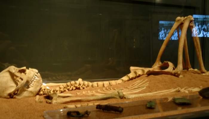 <p>Esquelet de macaco amb el seu aixovar, dels segles V - VI, procedent del jaciment de les Colomines.</p>