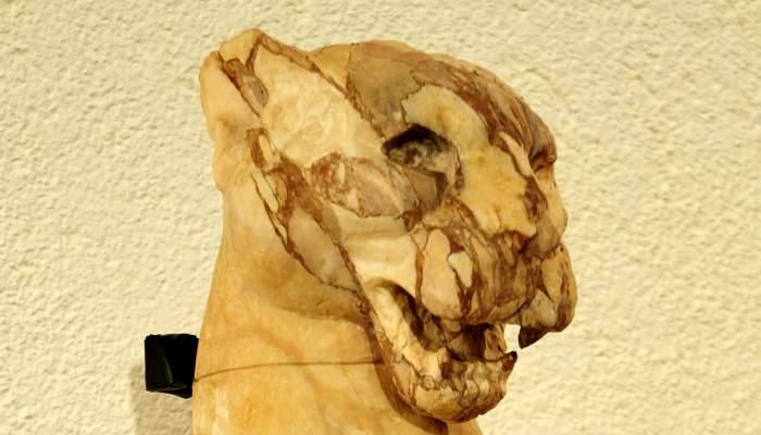 <p>Cap de lleona (s. II dC).</p>