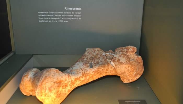 """<p><strong><span style=""""font-weight: 400;"""">H&uacute;mer de rinoceront, trobat al jaciment de La Bretxa, dins la pedrera de Lucas, a Alcover-Mont-ral.</span></strong></p>"""