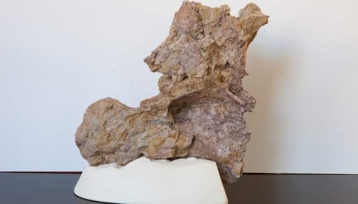 <p>V&egrave;rtebra de titanosaure</p>
