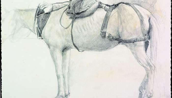 Cavall Max