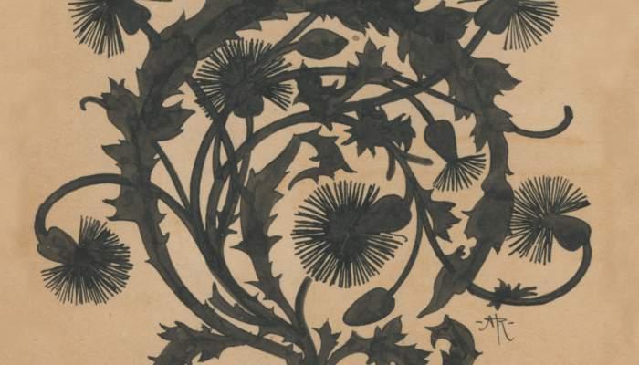 Culdellàntia de Crisantemes